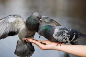 palomas ( El blog de Efraín Medina Hernández ). Reflexiones